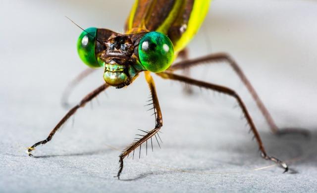 https://pixabay.com/de/libelle-insekt-nahaufnahme-auge-376885/
