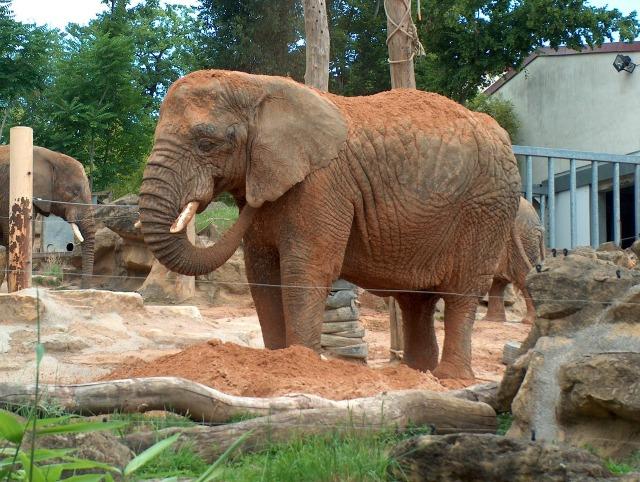 https://pixabay.com/de/elefant-tier-zoo-elefant-savanne-1211175/