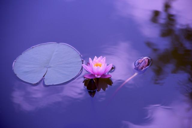 https://pixabay.com/de/lotus-nat%C3%BCrliche-wasser-meditation-1205631/