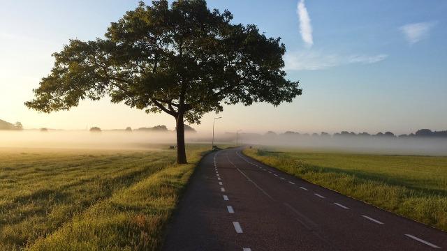 https://pixabay.com/de/stra%C3%9Fe-baum-nebel-land-landstra%C3%9Fe-1245901/