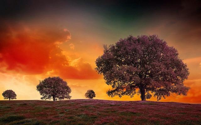 https://pixabay.com/de/surreal-b%C3%A4ume-landschaft-traum-501032/
