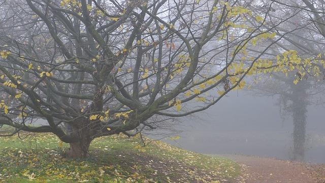 https://pixabay.com/de/nebel-herbst-november-laubfall-337730/