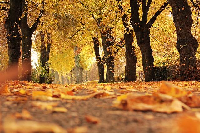 https://pixabay.com/de/b%C3%A4ume-allee-herbst-weg-stimmung-1789120/