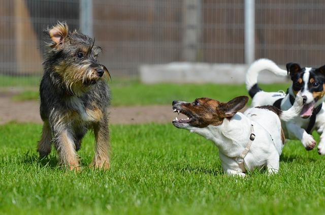 https://pixabay.com/de/mischlinge-klein-s%C3%BC%C3%9F-kleiner-hund-672790/
