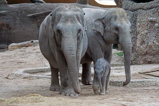 https://pixabay.com/de/asiatischer-elefant-jungtier-2108969/