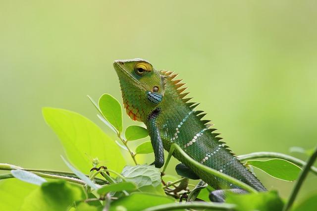 https://pixabay.com/de/cham%C3%A4leon-wild-natur-gr%C3%BCn-tapete-1900815/