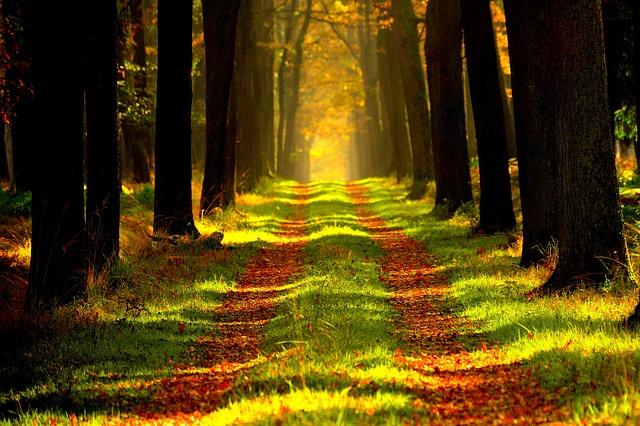 https://pixabay.com/de/wald-aussicht-tour-868715/