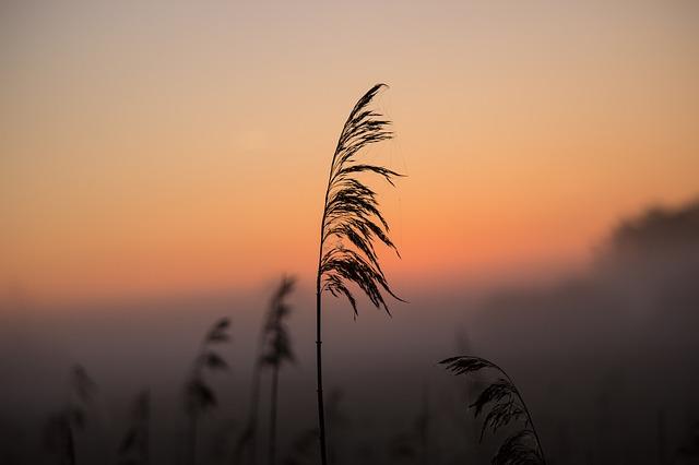 https://pixabay.com/de/sonnenaufgang-ried-schilf-schatten-2351990/