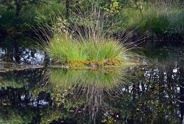 https://pixabay.com/de/moor-spiegelung-wasser-pietzmoor-1624691/
