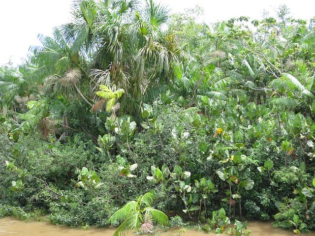 https://pixabay.com/de/amazonas-regenwald-brasilien-260797/