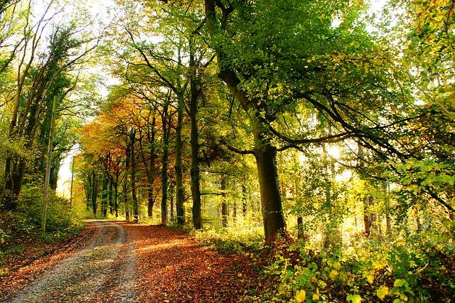 https://pixabay.com/de/b%C3%A4ume-land-landschaft-natur-saison-1913396/
