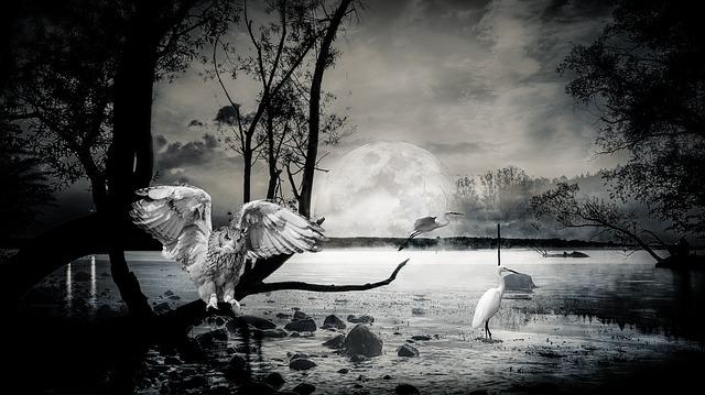 https://pixabay.com/de/composing-see-ibis-eule-2951336/