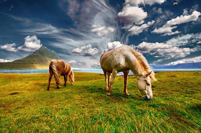 https://pixabay.com/de/pferde-landschaft-natur-feld-gras-2427513/