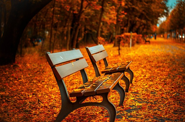 https://pixabay.com/de/bank-herbst-park-rest-sitzen-560435/