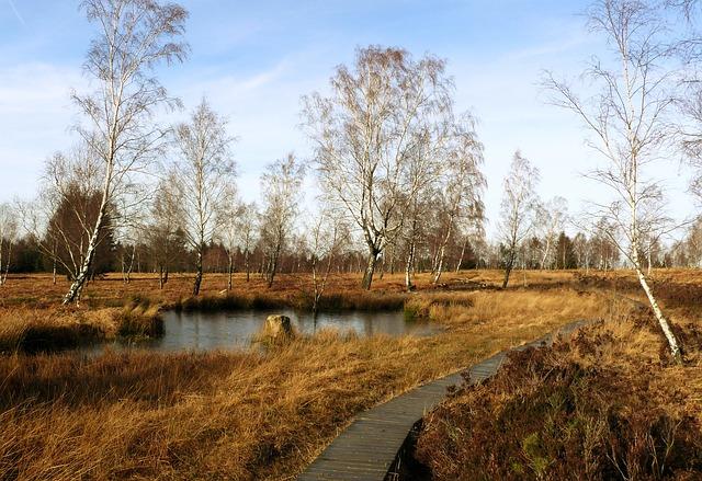 https://pixabay.com/de/moor-landschaft-see-teich-gew%C3%A4sser-302176/