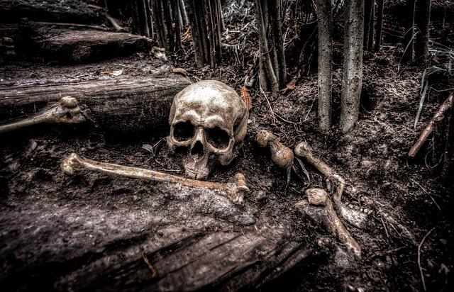 https://pixabay.com/de/sch%C3%A4del-knochen-skelett-kopf-tod-2525192/