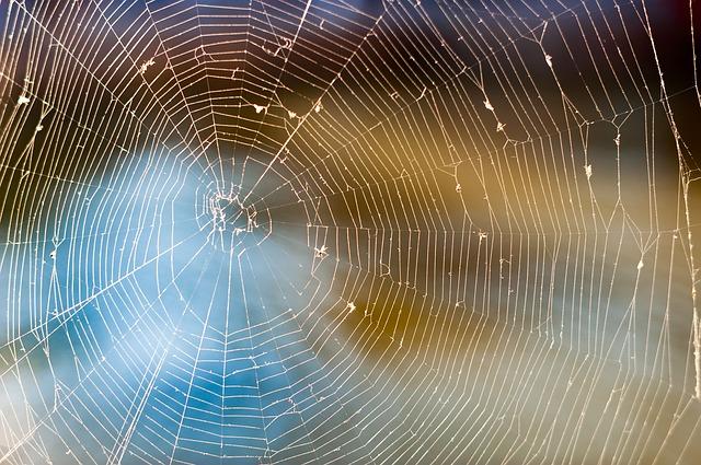 https://pixabay.com/de/web-spinne-natur-wasser-insekten-886843/