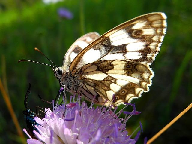 https://pixabay.com/de/schmetterling-insekt-babo%C4%8Dkovit%C3%AD-1508778/