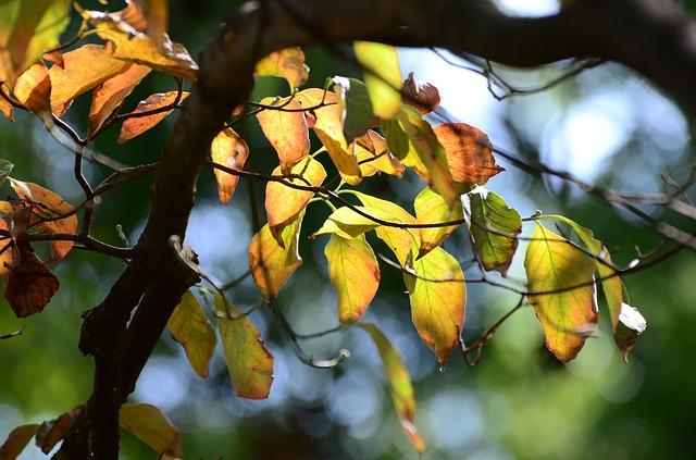 https://pixabay.com/de/blatt-baum-natur-flora-im-freien-3174038/