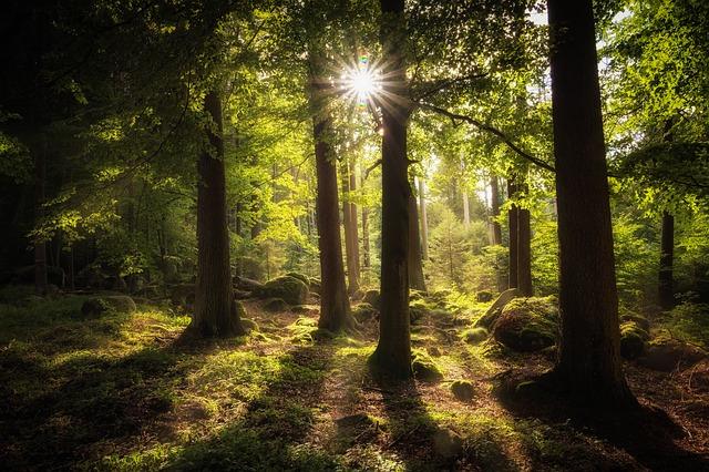 https://pixabay.com/de/wald-sonne-stimmung-lichtstimmung-2541928/