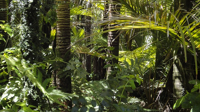 https://pixabay.com/de/regenwald-palmen-moos-78516/