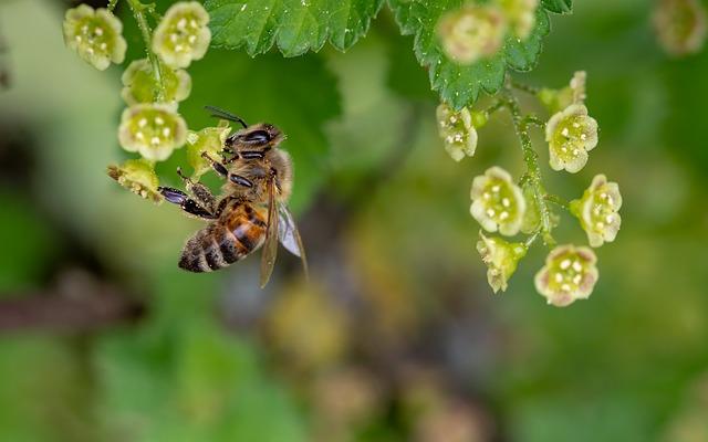 https://pixabay.com/de/biene-honigbiene-insekt-3360682/