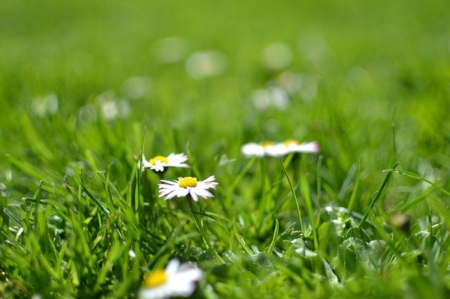 https://pixabay.com/de/bl%C3%BCte-g%C3%A4nsebl%C3%BCmchen-flora-blumen-1842656/