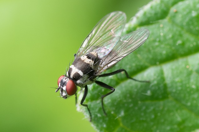 https://pixabay.com/de/gemeinsames-fliegen-makro-insekt-447307/