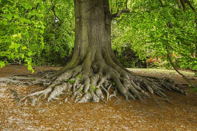 https://pixabay.com/de/baum-natur-alt-park-2784155/