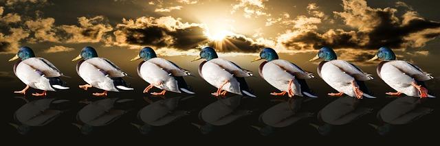 https://pixabay.com/de/tiere-enten-wasservogel-laufen-2000583/