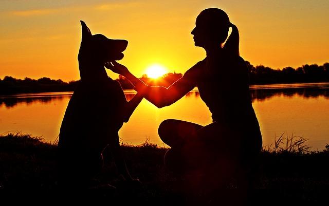 https://pixabay.com/de/dobermann-frau-kontur-sunrise-2390632/