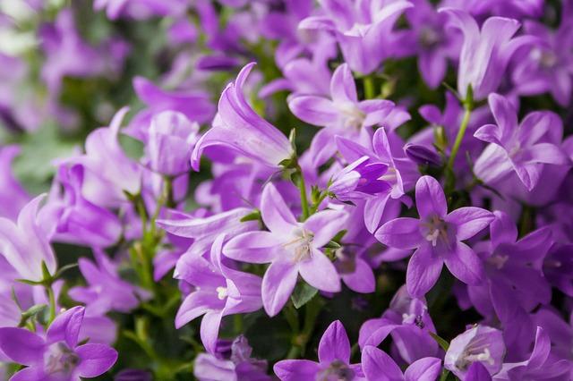 https://pixabay.com/de/blume-bl%C3%BCte-pflanze-natur-lila-736792/