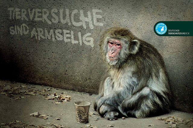 https://upload.wikimedia.org/wikipedia/commons/thumb/9/97/0610_Tierversuche_Affe.jpg/640px-0610_Tierversuche_Affe.jpg