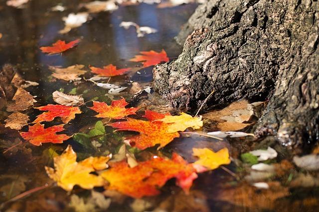 https://pixabay.com/de/herbst-bl%C3%A4tter-orange-gelb-saison-2900166/
