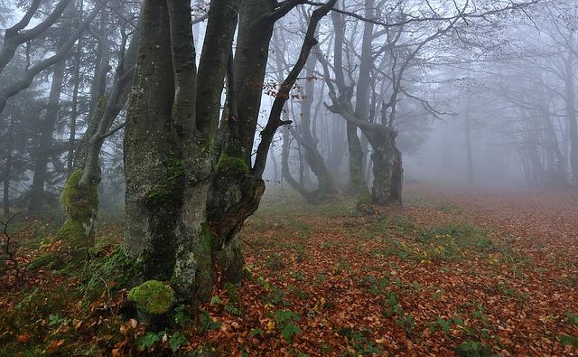 https://pixabay.com/de/buchen-der-nebel-herbst-wald-natur-3766314/