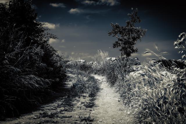 https://pixabay.com/de/nacht-mondschein-vollmond-stimmung-3494221/
