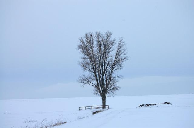 https://pixabay.com/de/schnee-wei%C3%9F-kalt-tod-winter-kahl-105006/