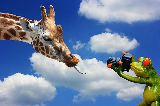 https://pixabay.com/de/giraffe-fotografieren-frosch-1161785/