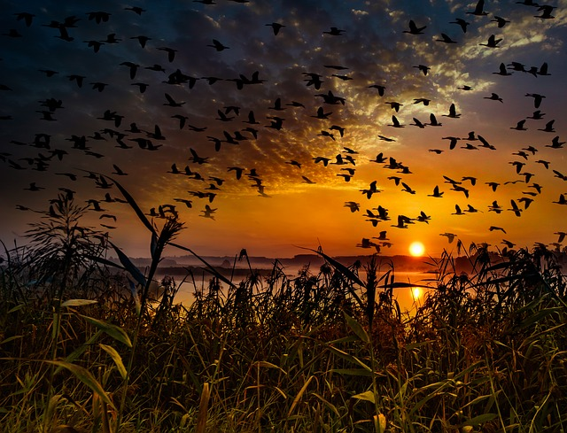 https://pixabay.com/de/sonnenuntergang-vogelschwarm-2973130/