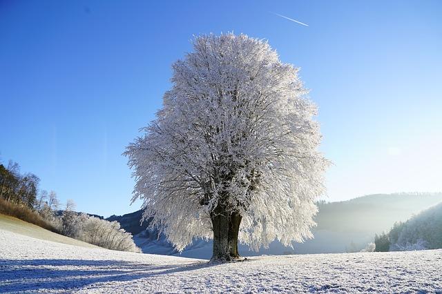 https://pixabay.com/de/baum-winterlandschaft-raureif-zweig-1959267/