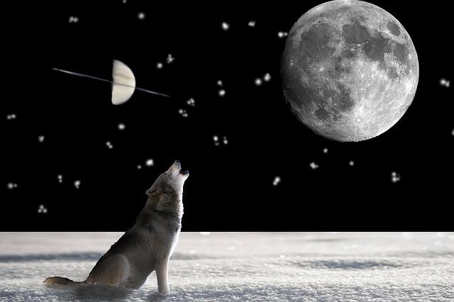 https://pixabay.com/de/wolf-tier-wild-hund-j%C3%A4ger-697736/
