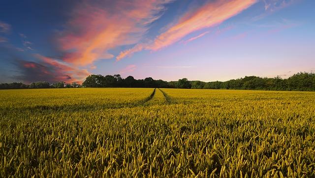 https://pixabay.com/de/landschaft-ernte-landwirtschaft-2326787/