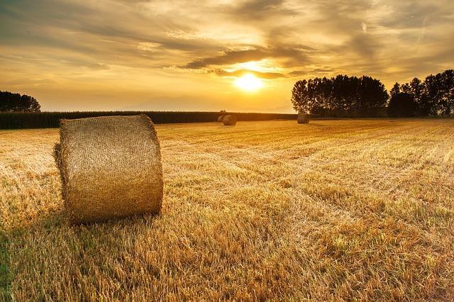 https://pixabay.com/de/heu-feld-landwirtschaft-1022849/