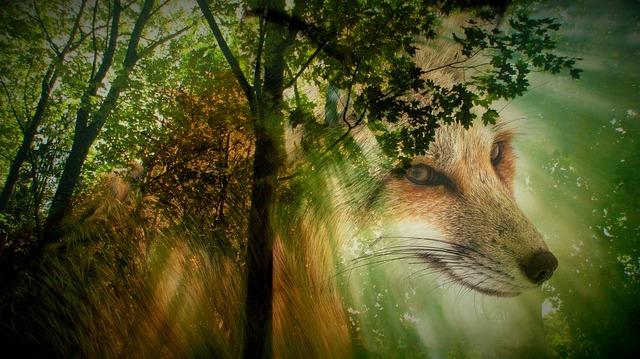 https://pixabay.com/de/fuchs-tier-wald-wildtier-2257543/