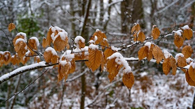 https://pixabay.com/de/bl%C3%A4tter-winter-copperbrown-schnee-3952834/