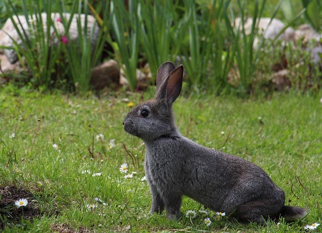 https://pixabay.com/photos/hare-animals-gray-hare-rabbit-1751616/