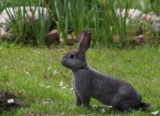 https://pixabay.com/photos/hare-animals-gray-hare-rabbit-1751616/