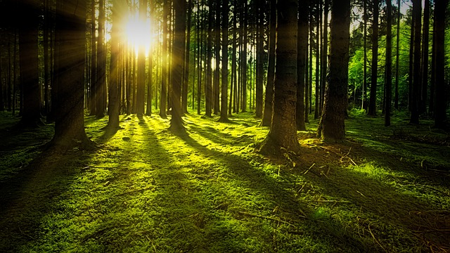 https://pixabay.com/photos/nature-forest-sun-moss-rays-green-3294681/