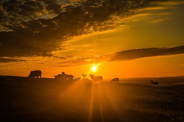 https://pixabay.com/photos/sun-sheep-clouds-811699/