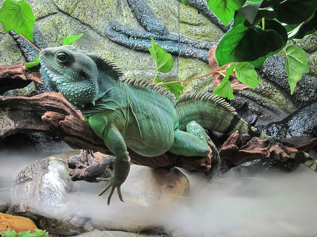https://pixabay.com/photos/lizard-aquarium-water-nature-518219/